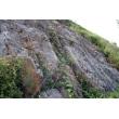 山体防护绿化网